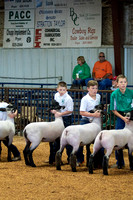 MAYES_COUNTY_FAIR_LAMBS_©KTROYER-7714