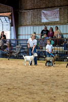 MAYES_COUNTY_FAIR_GOATS_©KTROYER-8448