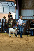 MAYES_COUNTY_FAIR_GOATS_©KTROYER-8453