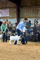 MAYES_COUNTY_FAIR_GOATS_©KTROYER-8457