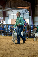 MAYES_COUNTY_FAIR_GOATS_©KTROYER-8460