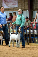MAYES_COUNTY_FAIR_GOATS_©KTROYER-8463