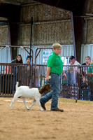 MAYES_COUNTY_FAIR_GOATS_©KTROYER-8465