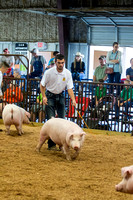 MAYES_COUNTY_FAIR_SWINE_©KTROYER-9454