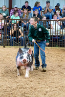 MAYES_COUNTY_FAIR_SWINE_©KTROYER-9730