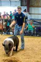 MAYES_COUNTY_FAIR_SWINE_©KTROYER-9571