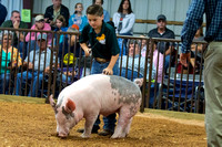 MAYES_COUNTY_FAIR_SWINE_©KTROYER-9333