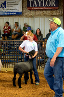 MAYES_COUNTY_FAIR_LAMBS_©KTROYER-7704