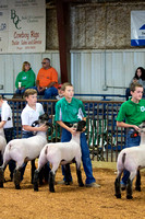 MAYES_COUNTY_FAIR_LAMBS_©KTROYER-7711