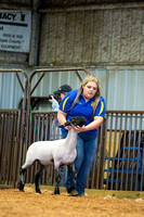 MAYES_COUNTY_FAIR_LAMBS_©KTROYER-7851