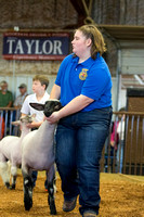 MAYES_COUNTY_FAIR_LAMBS_©KTROYER-7874