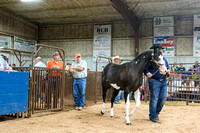 MAYES_COUNTY_FAIR_PREMIUM_SALE_©KTROYER-8988