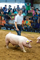 MAYES_COUNTY_FAIR_SWINE_©KTROYER-9445