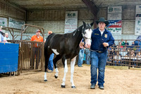MAYES_COUNTY_FAIR_PREMIUM_SALE_©KTROYER-8987