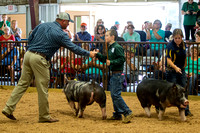 MAYES_COUNTY_FAIR_SWINE_©KTROYER-9746