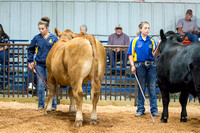 MAYES_COUNTY_FAIR_BEEF_©KTROYER-8691