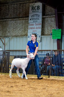 MAYES_COUNTY_FAIR_LAMBS_©KTROYER-7864