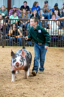 MAYES_COUNTY_FAIR_SWINE_©KTROYER-9731