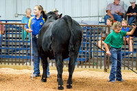 MAYES_COUNTY_FAIR_BEEF_©KTROYER-8689