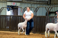 MAYES_COUNTY_FAIR_LAMBS_©KTROYER-7821
