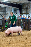 MAYES_COUNTY_FAIR_SWINE_©KTROYER-9444