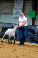 MAYES_COUNTY_FAIR_LAMBS_©KTROYER-7845