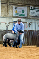 MAYES_COUNTY_FAIR_LAMBS_©KTROYER-7866