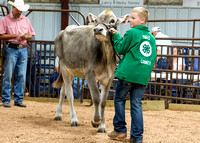 MAYES_COUNTY_FAIR_PREMIUM_SALE_©KTROYER-97