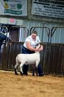 MAYES_COUNTY_FAIR_LAMBS_©KTROYER-7844
