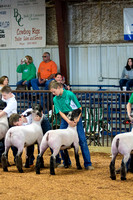 MAYES_COUNTY_FAIR_LAMBS_©KTROYER-7707