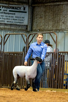 MAYES_COUNTY_FAIR_LAMBS_©KTROYER-7852