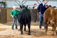 MAYES_COUNTY_FAIR_BEEF_©KTROYER-8696