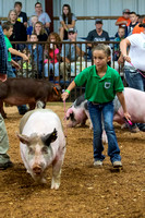 MAYES_COUNTY_FAIR_SWINE_©KTROYER-9349