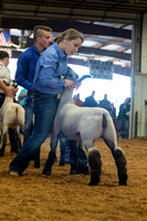 MAYES_COUNTY_FAIR_LAMBS_©KTROYER-7879