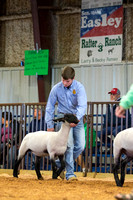 MAYES_COUNTY_FAIR_LAMBS_©KTROYER-7850