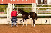MAYES_COUNTY_FAIR_HORSES_©KTROYER-7274