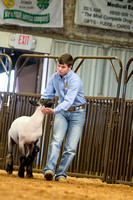 MAYES_COUNTY_FAIR_LAMBS_©KTROYER-7856